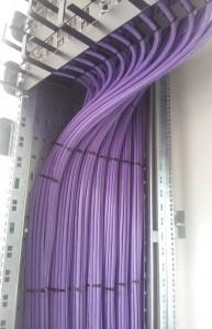 purple tall 1